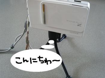 P1001051b.JPG